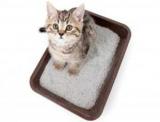 Как приучить месячного котенка к лотку: методы и рекомендации. Лоток лучше для котенка